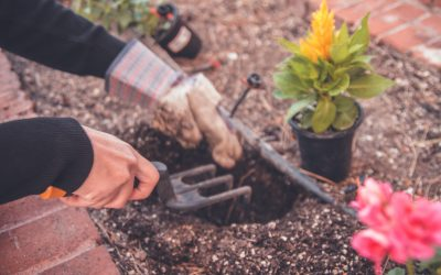 Cultive ton jardin